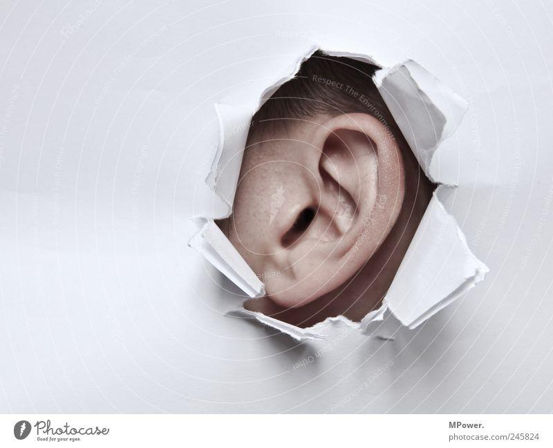 mal reinhören Haut Mensch maskulin Erwachsene Kopf Ohr 1 Papier bedrohlich gruselig kaputt braun weiß Angst Loch aufreißen Voyeurismus Überwachungsstaat zentral