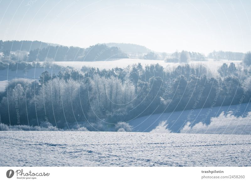 Schneelandschaft Schneefall Winter Landschaft kalt Frost Eis Sonne Gegenlicht Minusgrade Feld Baum