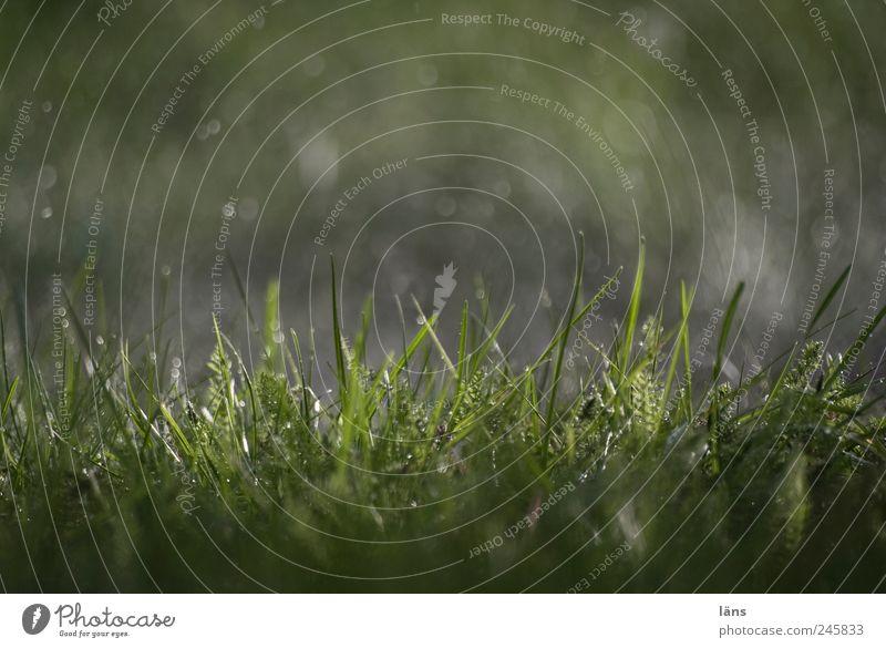 sommer 2011 Wassertropfen Regen Gras nass grün Halm unbeständig Farbfoto Außenaufnahme Menschenleer Tag Licht Schatten Kontrast Lichterscheinung Sonnenlicht