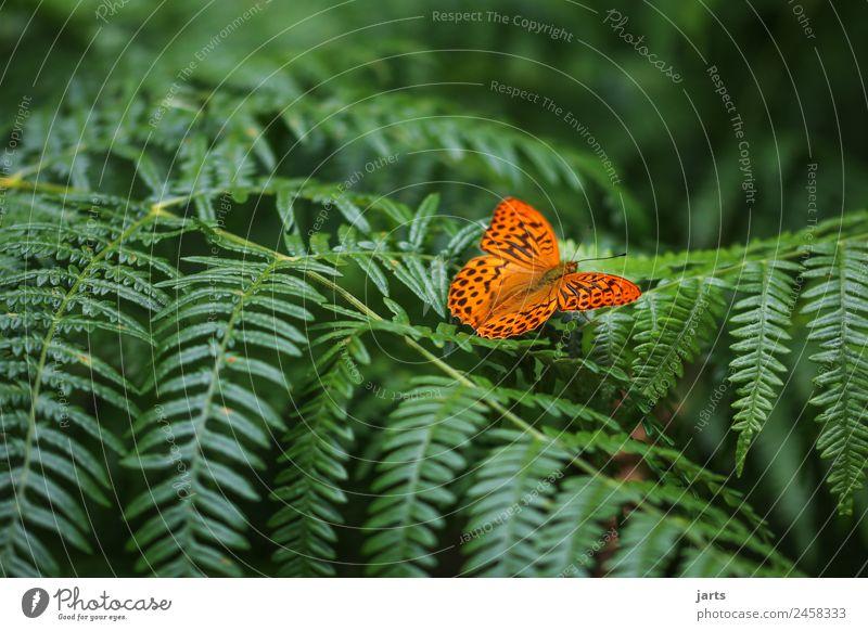 lieblingstier Pflanze Tier Frühling Sommer Schönes Wetter Farn Wald Wildtier Schmetterling 1 sitzen schön natürlich grün orange Gelassenheit ruhig Natur