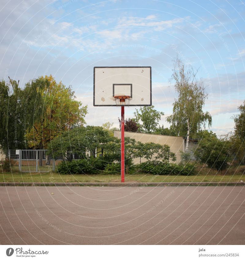 korb Freizeit & Hobby Sport Ballsport Basketballkorb Basketballplatz Umwelt Natur Himmel Pflanze Baum Gras Sträucher Platz Farbfoto Außenaufnahme Menschenleer