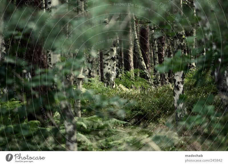 Träume sagen die Wahrheit Natur Baum grün schön Einsamkeit Wald Freiheit Landschaft Umwelt Leichtigkeit Märchen bezaubernd Birke Verhext Märchenwald