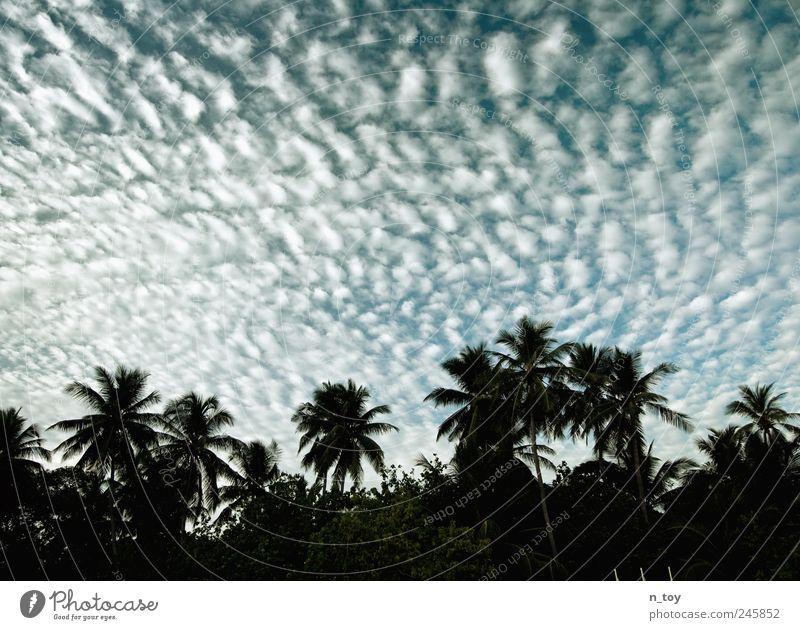 skylight Himmel Ferien & Urlaub & Reisen Meer Wolken Ferne Freiheit Küste Tourismus Insel Asien Palme exotisch Sommerurlaub Malediven Wolkenhimmel Atoll