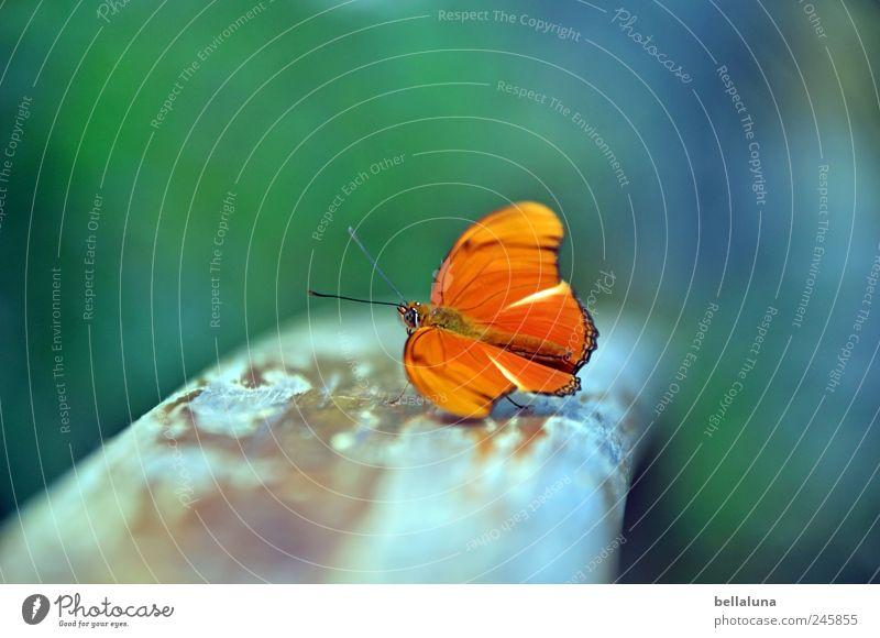 Gleichgewicht? Natur weiß grün blau schön Tier braun orange elegant ästhetisch natürlich einzigartig nah Flügel Wildtier Insekt