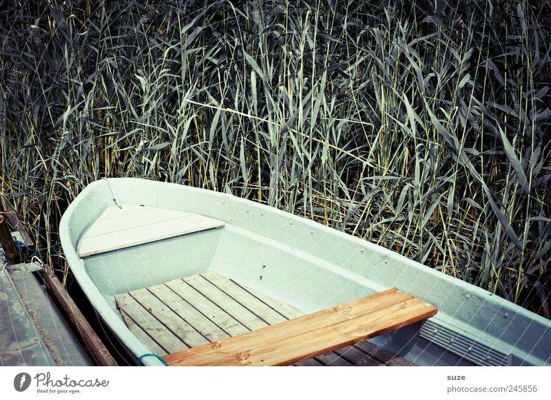 Boot Umwelt Natur Sommer Wetter Küste Seeufer Ruderboot Wasserfahrzeug Holz liegen Schilfrohr Steg Einsamkeit Fischerboot friedlich grün Pflanze Farbfoto