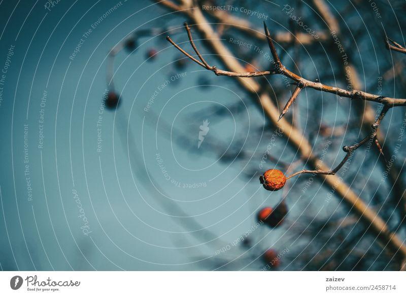 Natur Sommer Pflanze Farbe schön grün Baum rot Blatt Winter Wald dunkel Umwelt Herbst natürlich Wiese