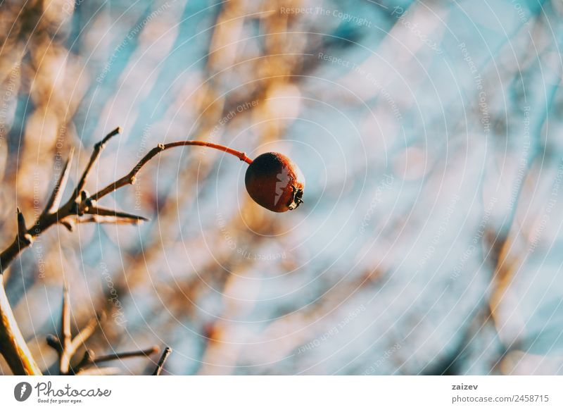 Natur Sommer Pflanze Farbe schön grün Baum rot Blatt Winter Wald dunkel Umwelt natürlich Wiese Garten