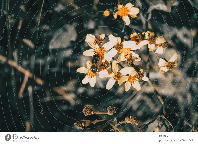 Natur Sommer Pflanze Farbe schön grün weiß Blume Blatt Wald Leben gelb Umwelt Blüte natürlich Wiese