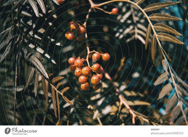 Natur Sommer Pflanze Farbe schön grün Baum rot Blatt Wald dunkel gelb Umwelt natürlich Wiese Garten