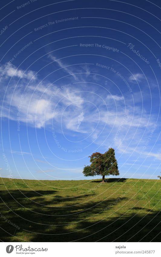 entspannte ruhe Himmel Natur Baum grün blau Pflanze Sommer Einsamkeit Umwelt Luft Kraft Erde Zufriedenheit Horizont ästhetisch stehen