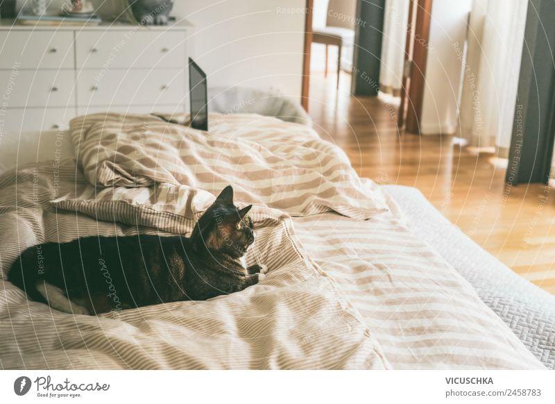 Katze Im Bett Im Schlafzimmer Ein Lizenzfreies Stock Foto Von