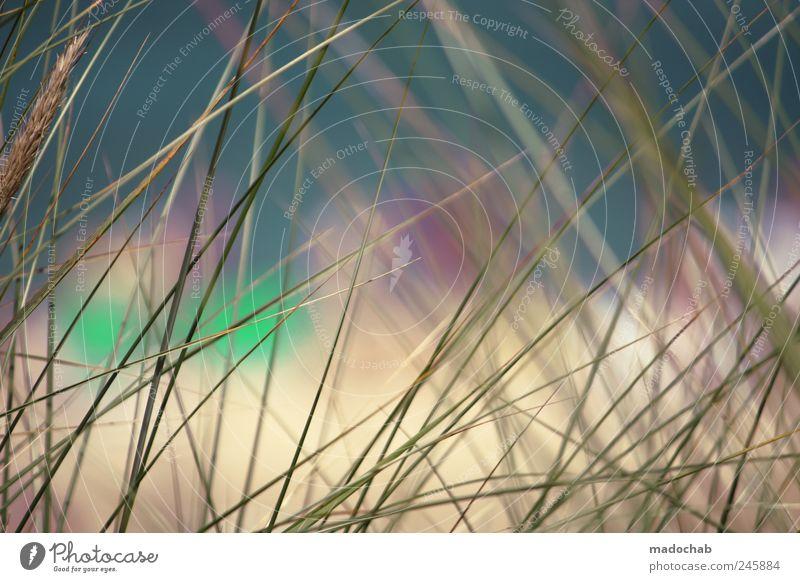 Eigenlob macht blind. Pflanze Sommer Ferien & Urlaub & Reisen Strand ruhig Farbe Erholung Stimmung frei Tourismus Kitsch Idylle fantastisch Düne Meditation Wohlgefühl