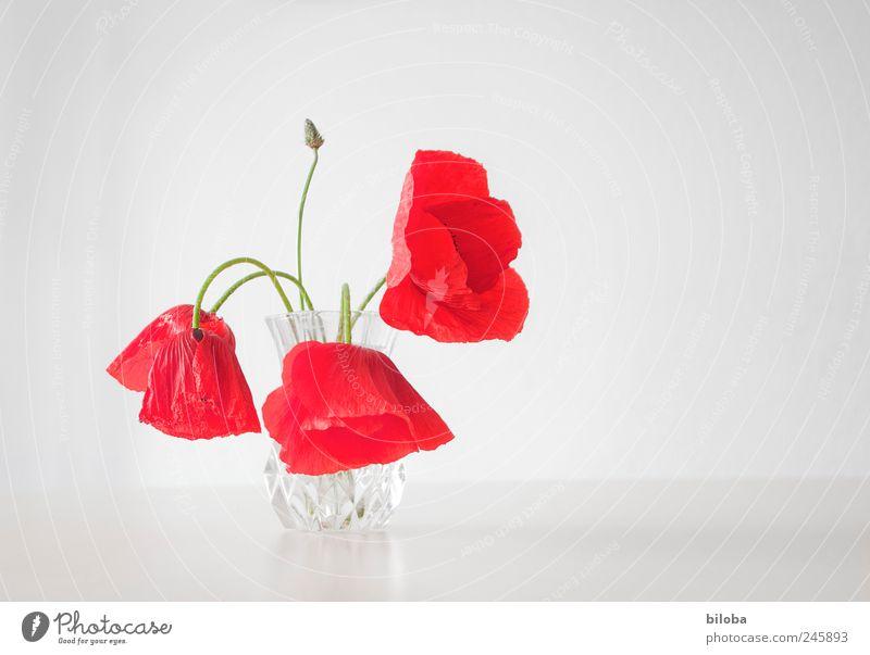 Mo(h)ntag weiß grün rot 3 Dekoration & Verzierung Mohn Muttertag Blumenstengel Mohnblüte