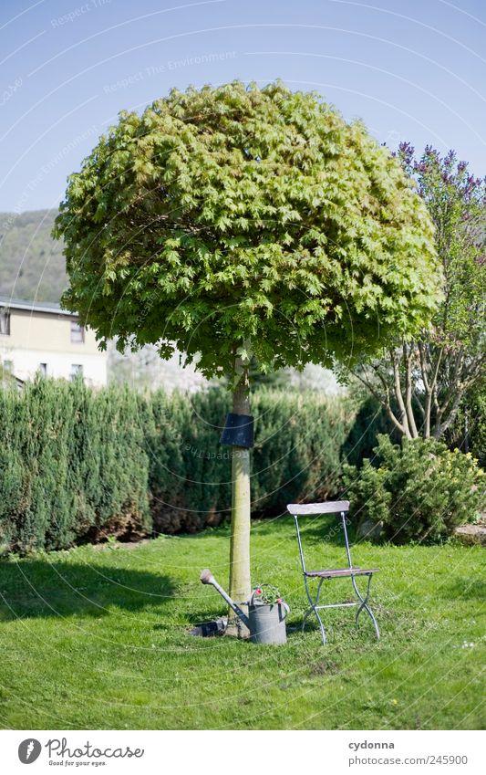 Gartenidyll Lifestyle harmonisch Wohlgefühl Erholung ruhig Ausflug Sonnenbad Umwelt Natur Wolkenloser Himmel Sommer Baum Gras Wiese Beratung Einsamkeit
