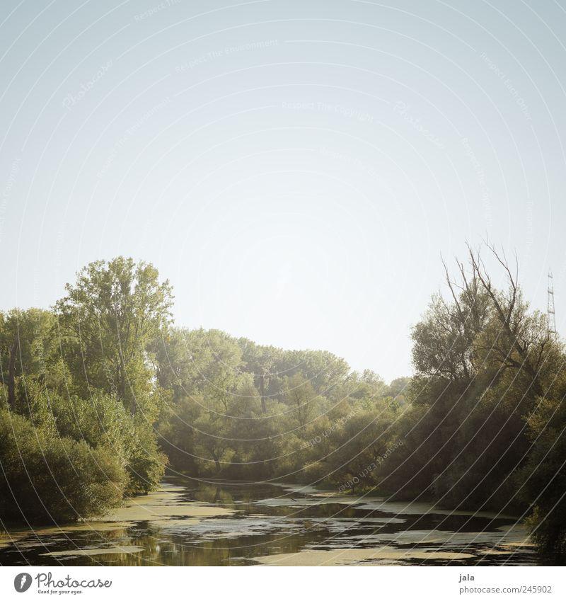 altrhein Himmel Natur Baum Pflanze Landschaft Umwelt ästhetisch Fluss Sträucher Rhein Gewässer Grünpflanze Wildpflanze Wasserpflanze