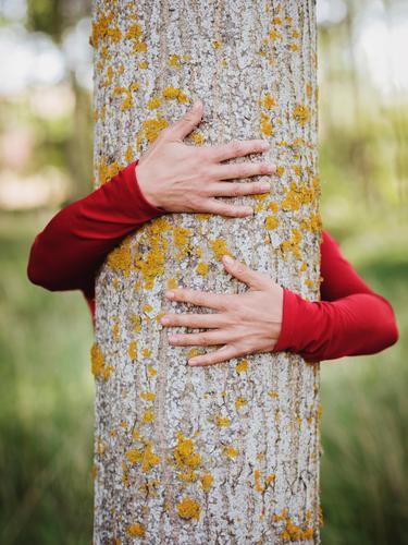Hände einer Frau, die einen Baum umarmt. Leben harmonisch Meditation Mensch Junge Frau Jugendliche Erwachsene Arme Hand Finger 1 30-45 Jahre Umwelt Natur