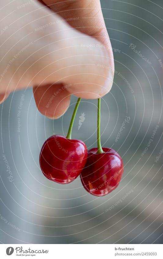 Kirschen im Doppelpack Lebensmittel Frucht Bioprodukte Mann Erwachsene Hand Finger Sommer Garten wählen berühren festhalten frisch paarweise Ernte fruchtig