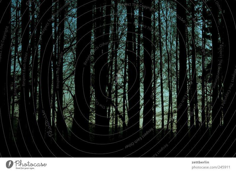 Wald Himmel Natur Wald dunkel Landschaft Ausflug geschlossen Tourismus Ast eng Baumstamm Unterholz Nadelwald Märchenwald sonnenlos