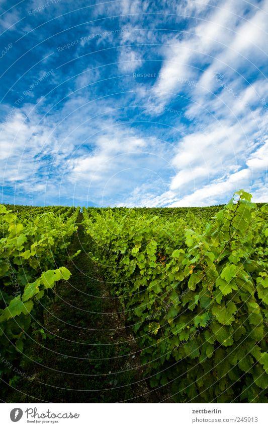Weinberg Winzer Himmel Wolken Sommer Landwirtschaft Ernte Blatt Sträucher Berge u. Gebirge Hügel Erholung Tourismus Weinlese