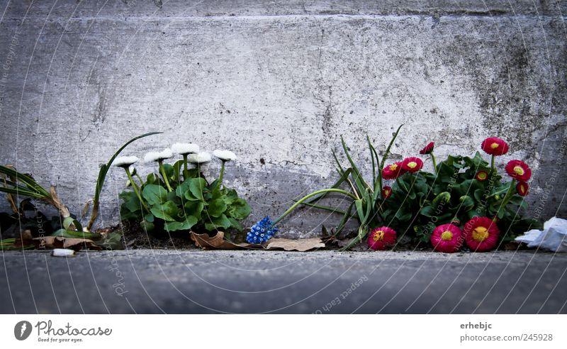Grazien im Betondschungel Natur Pflanze schön Blume Blatt Ferne Straße Frühling Blüte Wege & Pfade Freiheit außergewöhnlich Zufriedenheit elegant Erde