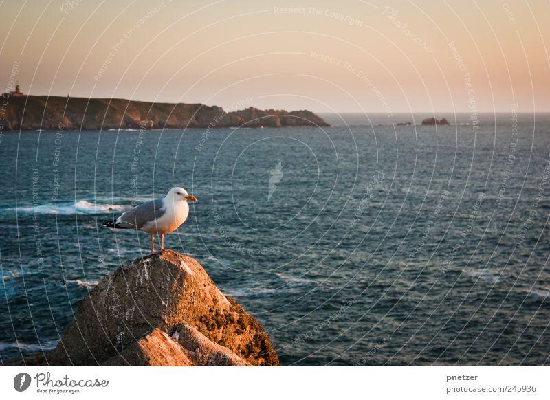 Ausblick Umwelt Natur Luft Wasser Wolkenloser Himmel Sonnenaufgang Sonnenuntergang Sommer Klima Klimawandel Wetter Schönes Wetter Felsen Wellen Küste Bucht Meer