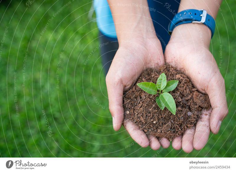 Kinder pflanzen einen Baum Leben Garten Erfolg Gartenarbeit Business Baby Hand Umwelt Natur Pflanze Erde Blatt Wald Tropfen Wachstum frisch klein natürlich neu