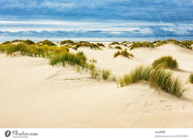 Landschaft mit Dünen auf der Insel Amrum Erholung Ferien & Urlaub & Reisen Tourismus Strand Meer Natur Sand Wolken Herbst Küste Nordsee blau gelb Umwelt