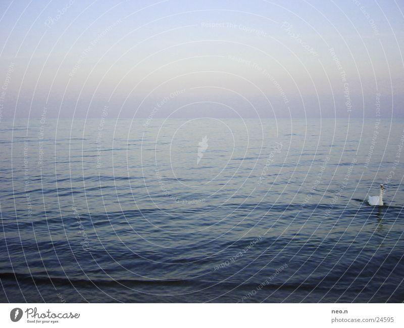 Horizon Schwimmen & Baden Ferne Freiheit Meer Wellen Wasser Wolkenloser Himmel Horizont Ostsee Schwan blau Sonnenuntergang Meerwasser Sommer Sommerabend