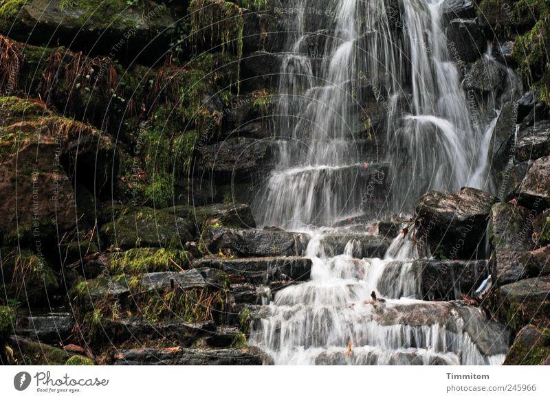 Kleine Entdeckungen (III): Das Wasser fällt! Natur Sommer ruhig kalt Gefühle Umwelt Stein Park ästhetisch Flüssigkeit Gelassenheit Lebensfreude Geborgenheit