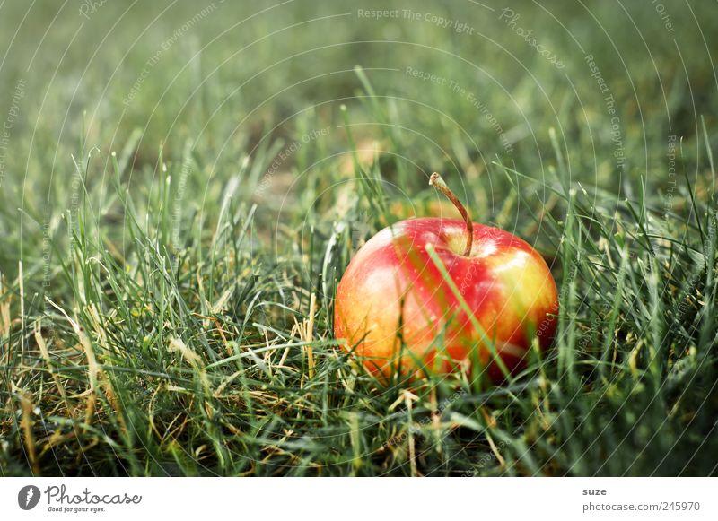 Der Apfel fiel recht weit vom Stamm grün rot Wiese Ernährung Lebensmittel Gras Frucht natürlich liegen authentisch süß Freundlichkeit Ernte saftig Paradies