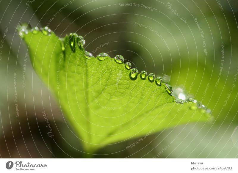 Tautropfen an grünem Blatt reflektieren in der Sonne Natur Pflanze Wassertropfen Sonnenlicht Frühling Schönes Wetter Wald ästhetisch außergewöhnlich Idylle