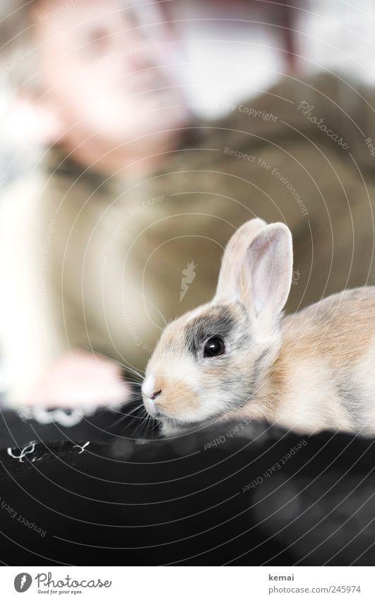 Aufrechte Löffel Tier Erholung hell Freundschaft Zusammensein Tierjunges sitzen Sicherheit niedlich Ohr Tiergesicht Fell Hase & Kaninchen Haustier Geborgenheit Osterhase