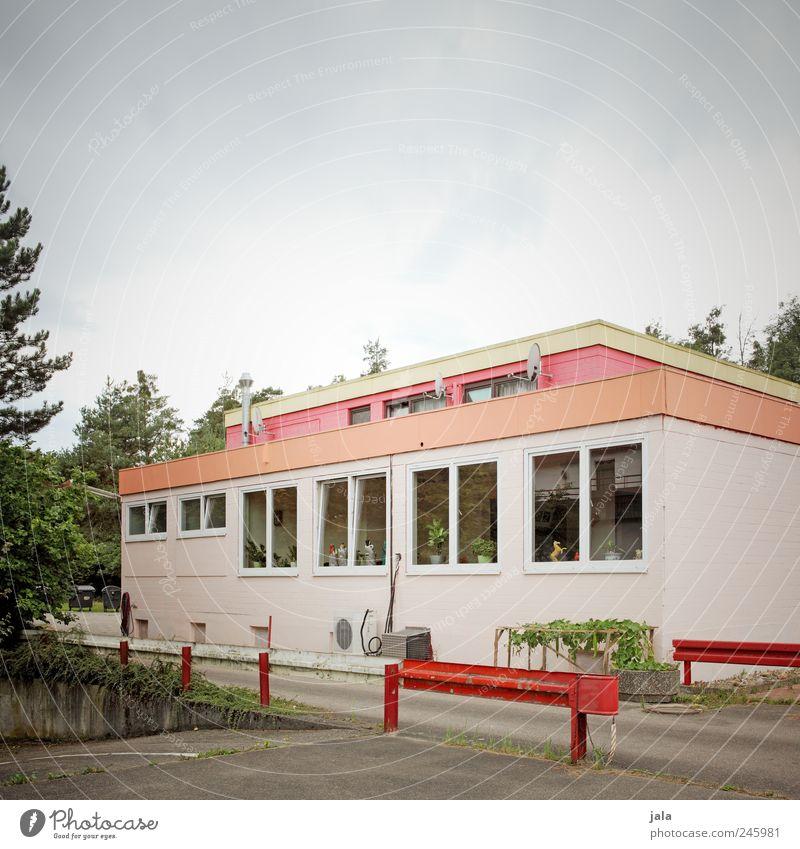 spicy town Himmel Baum Pflanze rot Haus Fenster Gebäude rosa trist Bauwerk Grünpflanze