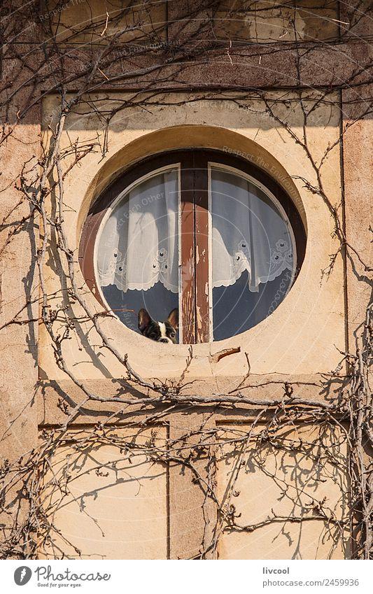 Hund, der sich aus dem runden Fenster lehnt, Frankreich Lifestyle Winter Haus Dekoration & Verzierung Freundschaft Pflanze Tier Baum Dorf Gebäude Architektur