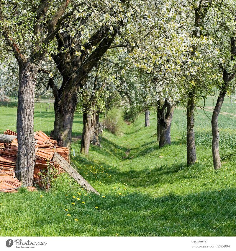 Frühlingspfad Natur schön Baum Einsamkeit ruhig Erholung Umwelt Landschaft Leben Wiese Freiheit Bewegung Wege & Pfade Frühling Blüte träumen