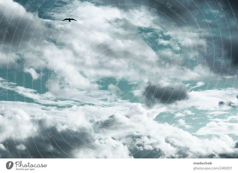 Eine Schwalbe, ist die beste Medizin. Himmel Wolken Ferne Tier Umwelt Vogel Kraft Zufriedenheit elegant fliegen ästhetisch Frieden Gelassenheit Mobilität