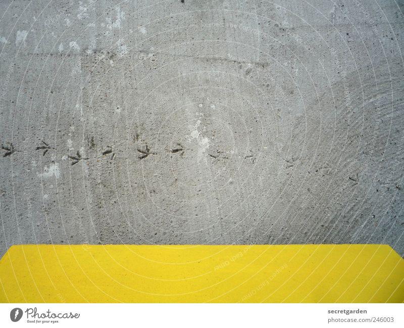 Alle Wege sind unergründlich. Einsamkeit Tier gelb grau Wege & Pfade Vogel Beton Verkehr Beginn Boden niedlich Vergangenheit Verkehrswege Fährte