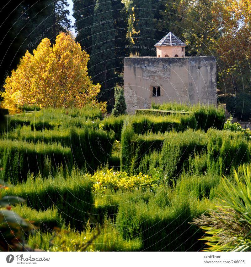 Gärtner im Urlaub Pflanze Schönes Wetter Baum Sträucher Garten Park Wachstum ästhetisch Alhambra Andalusien Granada Gartenbau Gebäude Herbst Herbstfärbung