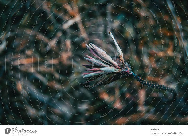 abstrakte Natur in einer dunklen Umgebung mit verschwommenem Hintergrund Design schön Berge u. Gebirge Garten Tapete Umwelt Pflanze Frühling Herbst Blatt Park