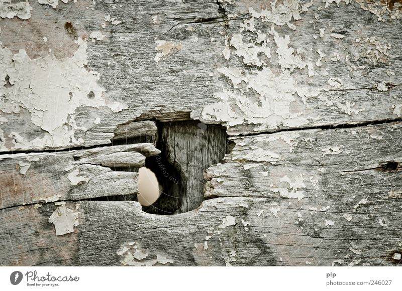 loch Holz alt dreckig kaputt trashig grau Loch Öffnung Riss Verfall Farbfoto Gedeckte Farben Außenaufnahme Nahaufnahme Detailaufnahme Strukturen & Formen
