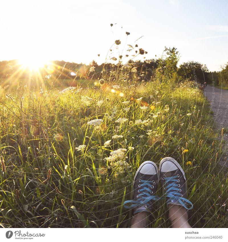 wegelagerer Beine Fuß 1 Mensch Umwelt Natur Landschaft Himmel Sommer Klimawandel Schönes Wetter Wiese Feld Freude einzigartig Sonne Gras Kreuter Blumen