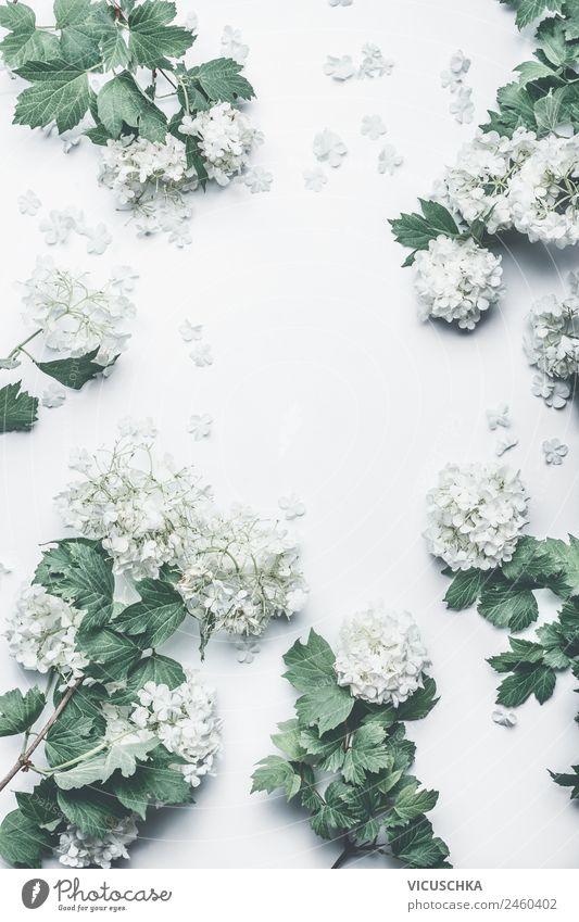 Weiße Blumem Rahmen Stil Design Winter Feste & Feiern Natur Pflanze Sträucher Blatt Blüte Dekoration & Verzierung Blumenstrauß rosa Entwurf Hintergrundbild
