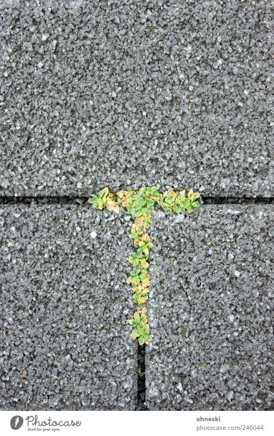 T-Gewächs grün Pflanze Stein Linie Schriftzeichen Tee Unkraut Menschenleer Symbole & Metaphern Lateinisches Alphabet Wildpflanze