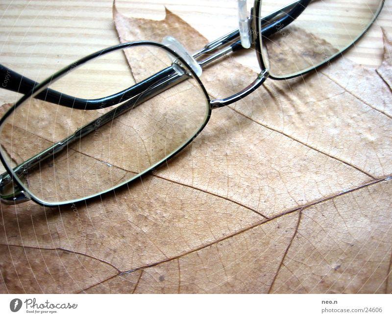 Herbstbrille Natur Baum Blatt Brille Holz natürlich braun intellektuell Brillengestell Ahorn Farbfoto Innenaufnahme Tag Licht