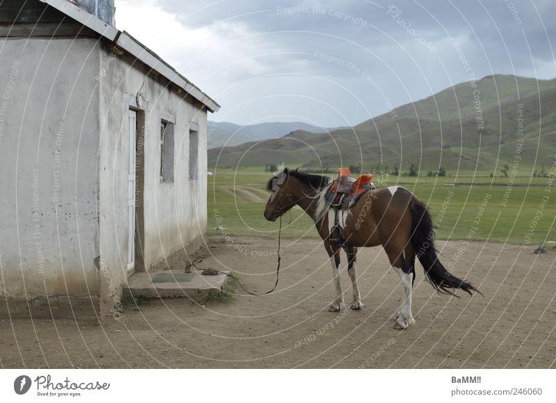 shopping Reiten Landschaft Tier Wolken Gewitterwolken Sommer Unwetter Wind Hügel Berge u. Gebirge Steppe Mongolei Haus Gebäude Fassade Fenster Tür Nutztier