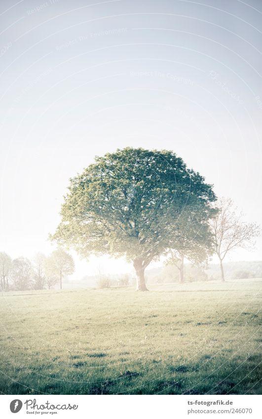 Krone der Schöpfung Natur grün Baum Pflanze Sommer Umwelt Wiese Landschaft Gras Luft Park Erde Wetter Feld Nebel natürlich