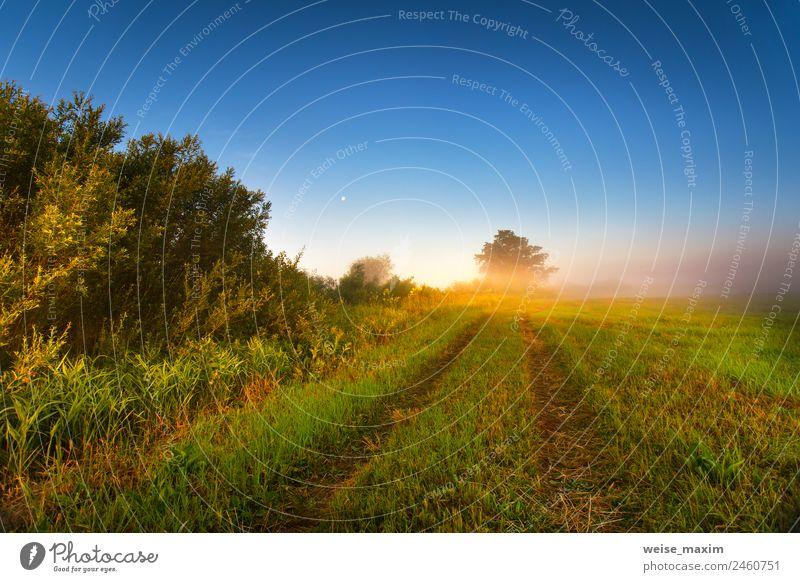 Nebliger, sonniger Morgen auf dem Sommerfeld Ferien & Urlaub & Reisen Sonne Natur Landschaft Himmel Wolken Herbst Schönes Wetter Nebel Baum Gras Sträucher