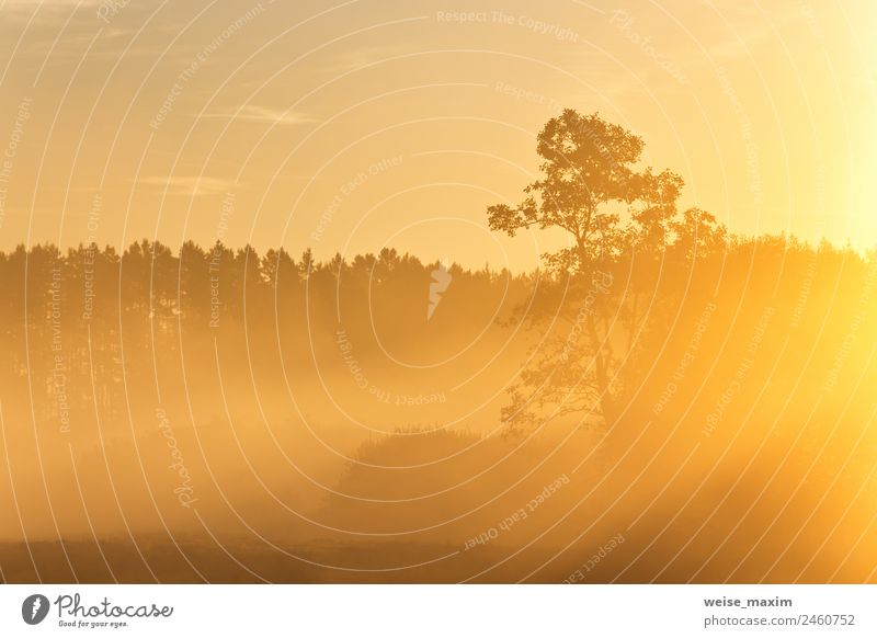 Kiefernsilhouette im Sonnenaufgang Morgendunstlicht Ferien & Urlaub & Reisen Sommer Natur Landschaft Himmel Wolken Sonnenuntergang Sonnenlicht Herbst Klima