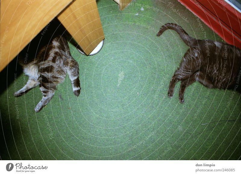 do it like me Haustier Katze 2 Tier liegen schlafen dick Zusammensein trashig unten wild grün Gelassenheit ruhig Müdigkeit Trägheit bequem Erholung Langeweile