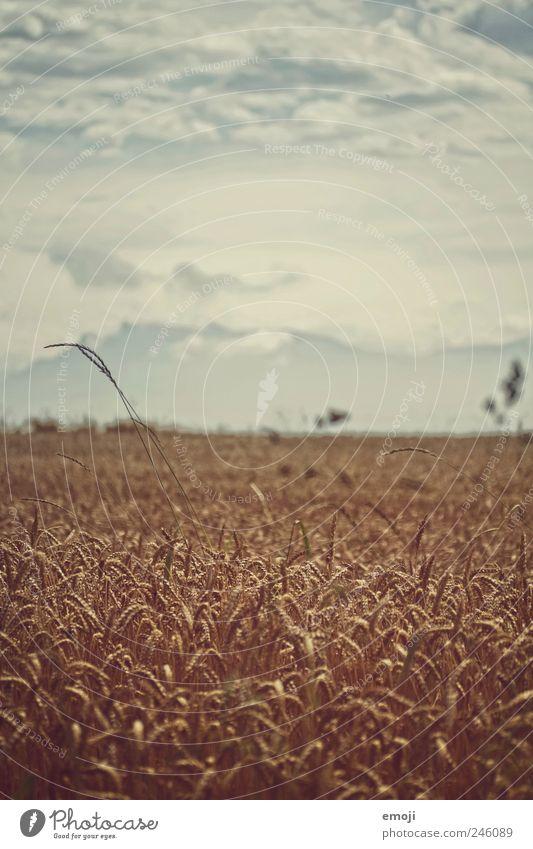 Getreidefeld Natur Landschaft Himmel Sommer Klimawandel Nutzpflanze Feld Berge u. Gebirge dunkel Korn Kornfeld Landwirtschaft natürlich Farbfoto Gedeckte Farben